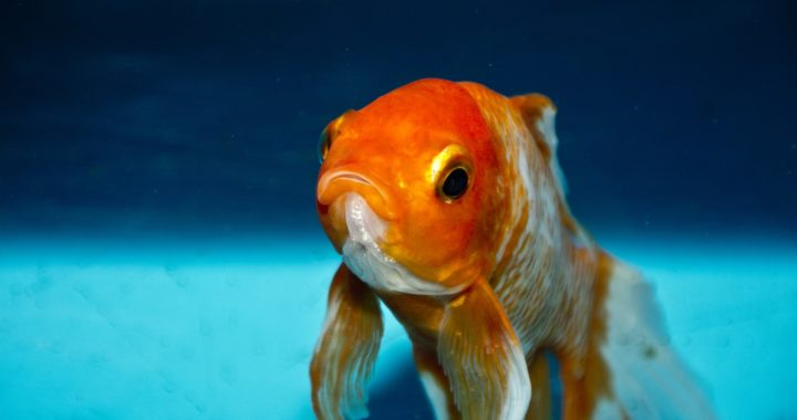 People now have shorter attention spans that goldfish